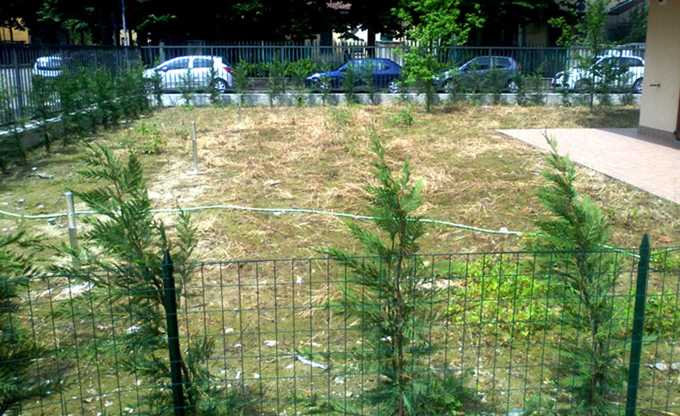 Area verde piantumazione siepe e giardino