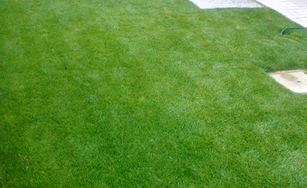 Area Verde prato zolle giardino